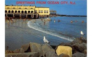 nj-ocean_city Birdseye View of the surf and Music Pier Unused