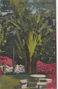 Florida St Petersburg Traveler's Tree In Sunken Gardens Curteich