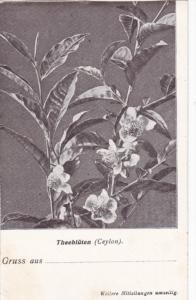 CEYLON , 1900-1910´s; Theebluten, Flower