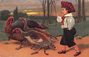 Thanksgiving Greetings Three Turkeys Leading By Boy PFB Postcard