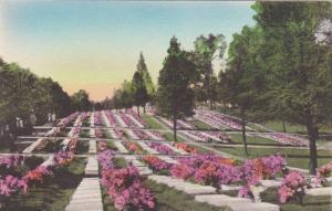 Scene of Easter Service, Moravain Graveyard, Winston-Salem, North Carolina, 2...