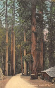 LPS53 Redwood Highway California Lane's Redwood Forest View Flat Hand Colored