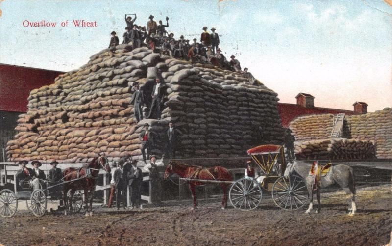 OVERFLOW OF WHEAT~LARGE PILE OF BURLAP BAGS~AGRICULTURE POSTCARD 1909 PSTMK