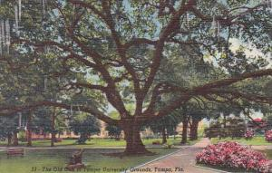 Florida Tampa The Old Oak In Tampa University Grounds