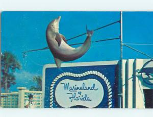 Pre-1980 PORPOISE JUMPS IN FRONT OF SIGN Marineland Florida FL Q1177