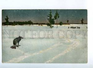 224867 RUSSIA KOWALSKY EGSiS #509 HUNTING wolf LITHUANIA night