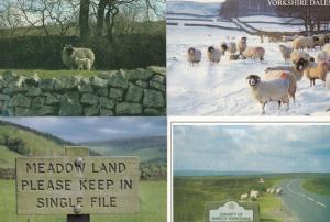 Yorkshire Dales Sheep Signpost Single Line Winter Grazing 4 SUPERB Postcard s