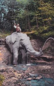 Elephants Elephant Fountain Zurich Switzerland