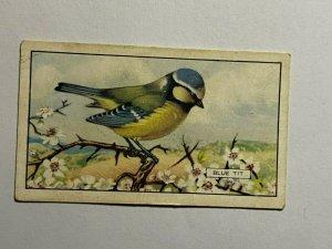 CIGARETTE CARD - GALLAHER BRITISH BIRDS #25 BLUE TIT  (UU115)
