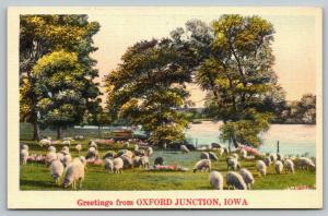 Oxford Junction Iowa~Sheep Graze in Meadow Alongside River~1940s Linen Postcard