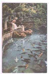 Fish at Devil's Hole Bermuda 1910c postcard