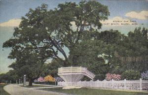 Oak Tree , East Beach , BILOXI , Mississippi , PU-1952