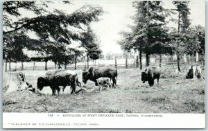 Tacoma, Wash. Postcard BUFFALOES AT POINT DEFIANCE PARK Charlton c1900s Unused