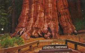 California General Sherman Tree Oldest Living Thing Known To Man