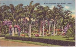 MIAMI FL - Royal palms line a drive somewhere in Miami, 1940s