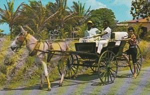 Barbados Old Donkey Drawn Buggy On A Country Road 1972