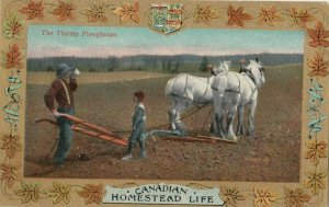Homestead Life , Canada , 1900-10s ; The Thirsty Ploughman