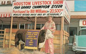 HOUSTON , Texas, 1964 ; Livestock Show winner Bull