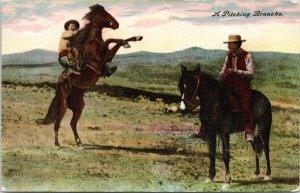 A Pitching Broncho Cowboys Horses Pearson's Bookshop Calgary AB Postcard G53