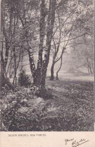 NEW FOREST , England, 1903; Silver Birches ; TUCK # 870