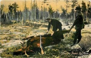 Hunters With Moose Down~Gun~Gutting~When the Guides Get Busy~1908 Postcard