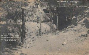 LP37 Calistoga Petrified Forest  California Postcard RPPC Tunnel Tree