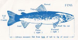 New Zealand Fishing Measuring Guide Wildlife Service Ephemera