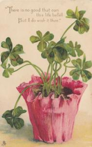 Pink pot of 4-leaf Clover , 1909 ,  TUCK 6761