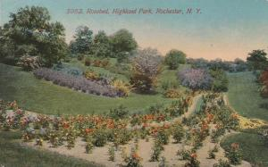 Rosebed at Highland Park - Rochester, New York - DB