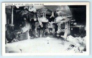 SCIO - OHIO POTTERY WILDLIFE MUSEUM ~ Taxidermy? ca 1940s OH Postcard