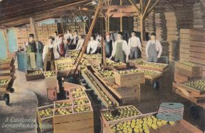 Lemon Packing House , California , 1900-10s