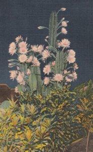 FLORIDA, 1940; Night-Blooming Cereus and Crotons
