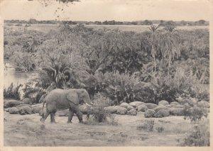 Elephant et Hippopotames , National Park , South Africa , 1945