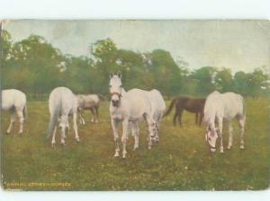 Divided-Back HORSE SCENE Great Postcard AA9421