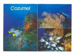 Fish at reef , COZUMEL , 50-70s #2