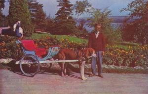 Attelage De Chien,  Dog Carriage, Quebec,  Canada,  40-60s