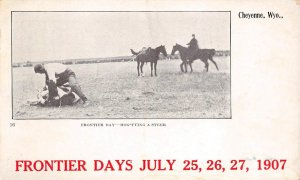 Frontier Days July, 1907 Hog-Tying A Steer, Cheyenne, Wyoming Vintage Postcard