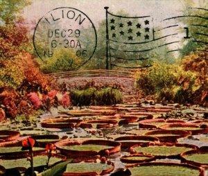 St Paul Minnesota MN Como Park Tropical Lily Pond 1906 UDB Vtg Postcard