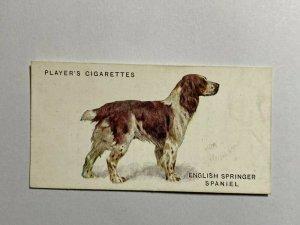CIGARETTE CARD - PLAYERS DOGS #36 ENGLISH SPRINGER SPANIEL  (UU259)