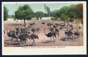 Cawston Ostrich Farm Los Angeles CA unused c1905