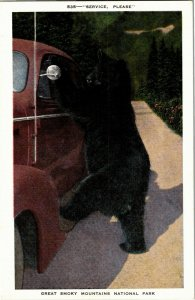 Black Bear Car Window, Service Please, Great Smoky Mts Nat'l Park Postcard F30