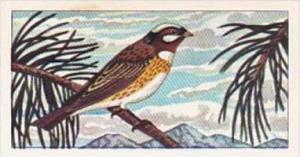 Glengettie Tea Trade Card Rare British Birds No 21 Pine Bunting