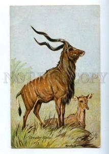160632 HUNT antelope GREATER KUDU by SCRIVENER old TUCK PC