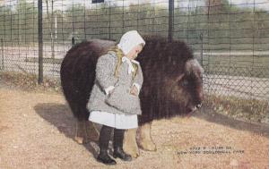 NEW YORK CITY, New York, 00-10s; Little Girl, bonnet, Musk Ox, Zoological Park