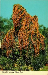 Postcard Florida's Flame Vine Bigonoia Venusta Poem Unposted Chrome 1498