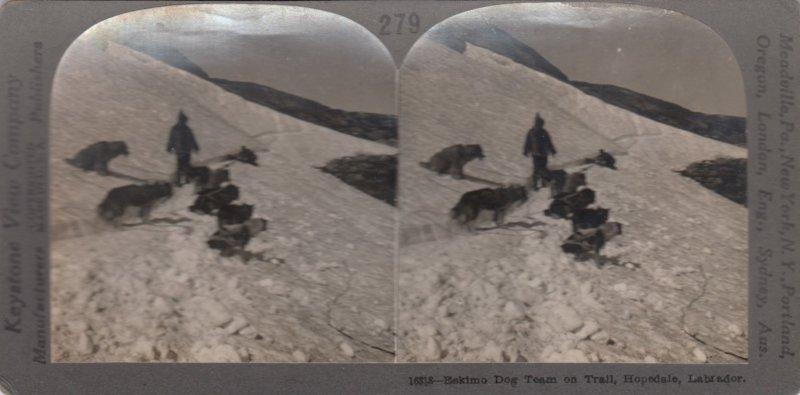 SV: Eskimo Dog Team on Trail , HOPEDALE , Labrador , Canada , 00-10s