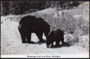 Michigan Greetings from IRON RIVER Bear in the Northwoods - RPPC - EKC 1939-1950