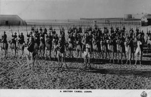 A British Camel Corps Sudan Africa Postcard