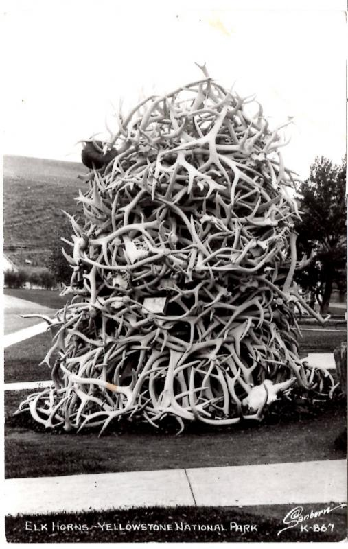 SANBORN 867, REAL PHOTO, Elk Horns, Yellowstone National Park