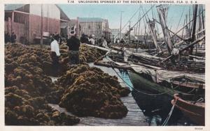 Florida Tarpon Springs Unloading Sponges At The Docks Curteich